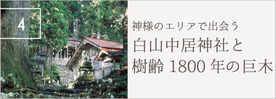 神様のエリアで出会う 白山中居神社と樹齢1800年の巨木