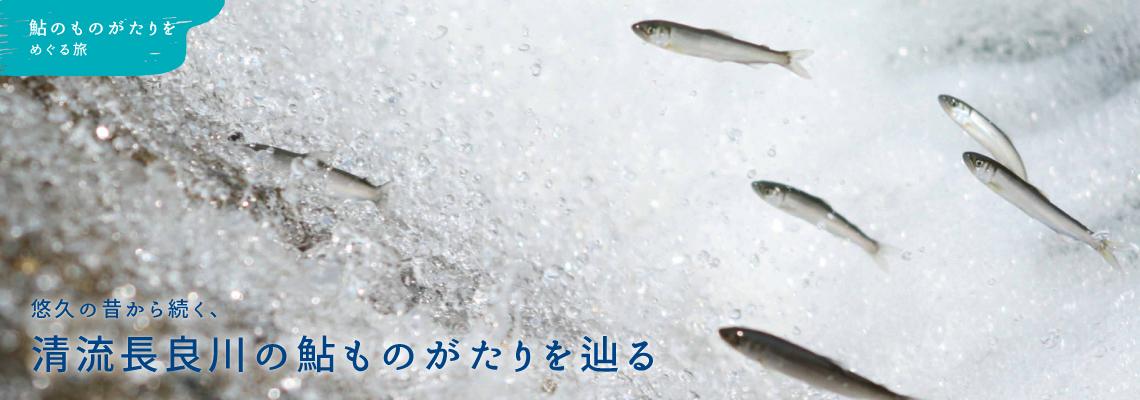 清流長良川の鮎ものがたりを辿る