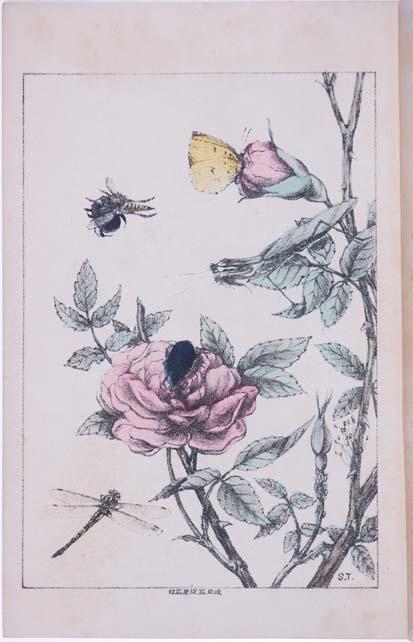 薔薇の一株 昆虫世界(名和靖)初版口絵