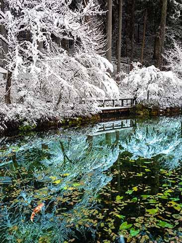 雪積もるモネの池
